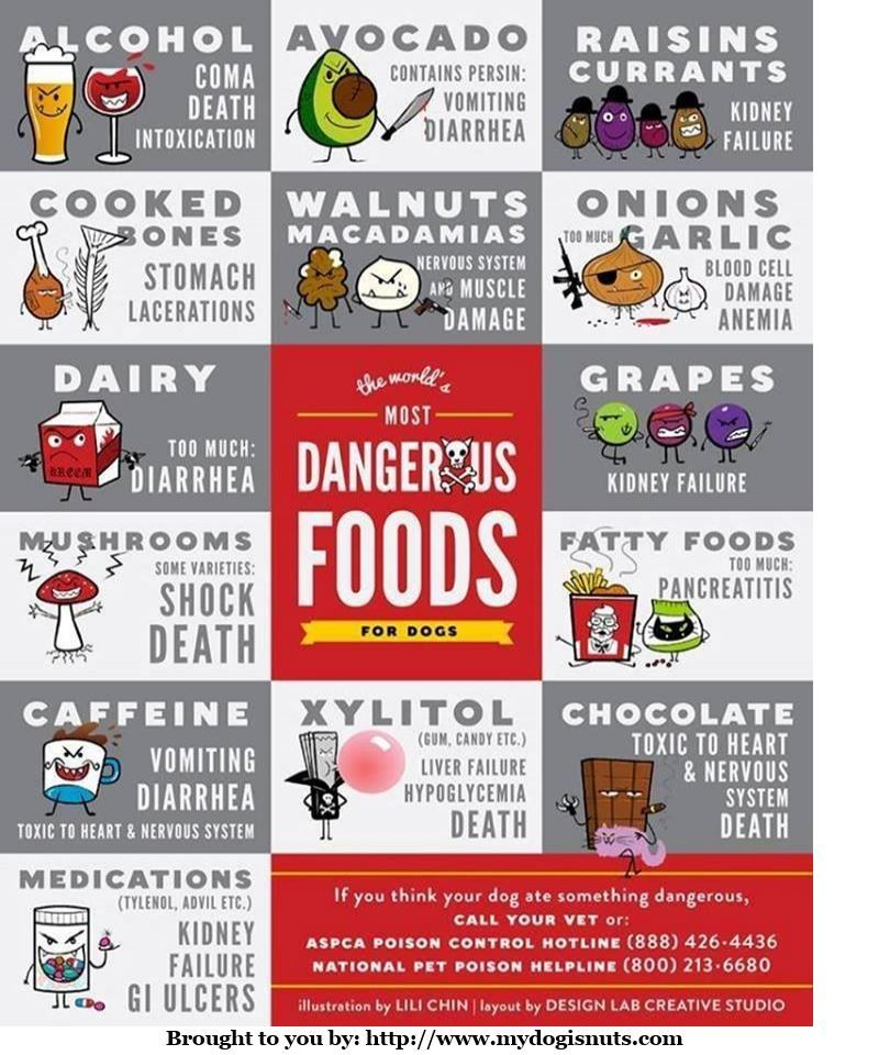 Dangerous Foods For Dogs Affecting Cats Too Health