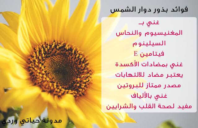 حياتي وردي ما هي فوائد بذور دوار الشمس الصحية والجمالية Sunflower Seeds Benefits Curcumin Benefits Curcumin