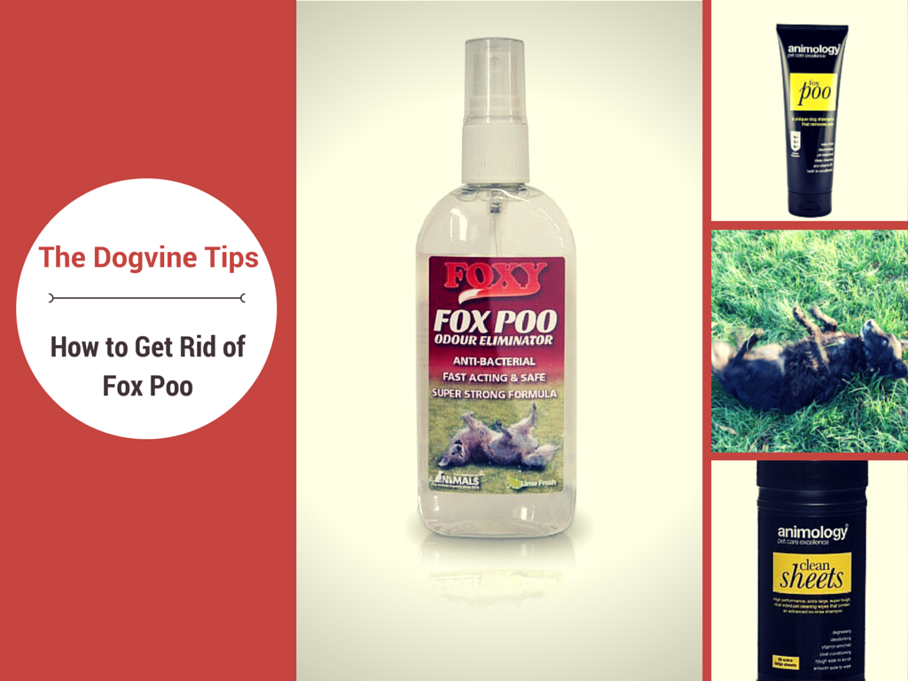 How to get rid of fox poo on dogs. Dog Tips from The Dogvine, the place for all London Dog Talk.