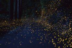 반딧불이 사진작가 - Vincent Brady
