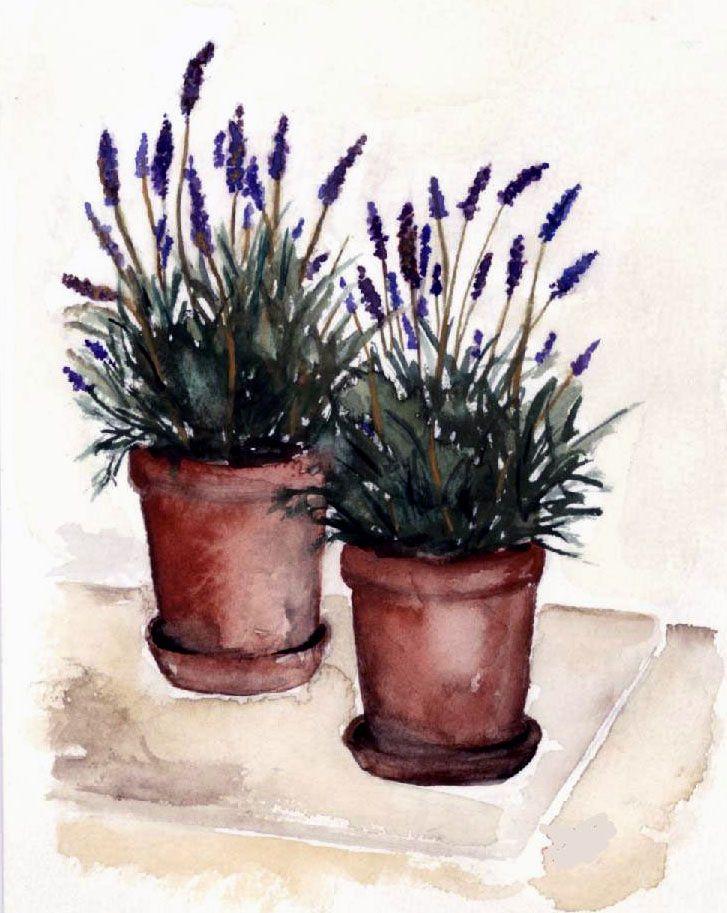 Painting Lavender Pots Lavender Flowers Flower Pots Note Cards