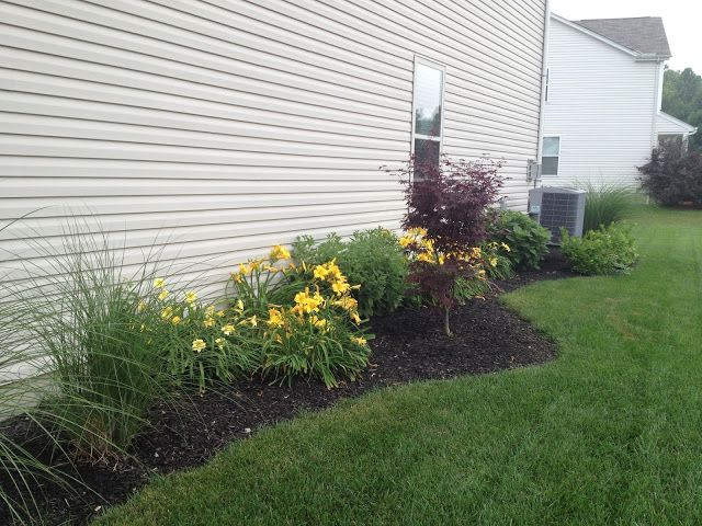 plant+ideas+for+side+of+the+house+ideas   and my dad removed ... on side of house addition, side of house wood, side of house textures, side of house landscaping ideas, side of house decorations, side of house clipart, side of house decks, side of house flowers, side of house rocks, side of house retaining wall, side of house landscape, side of house walkways, side of house design, side of house garden,