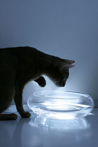 Bill Evans_cat_7417 | Flickr - Photo Sharing!
