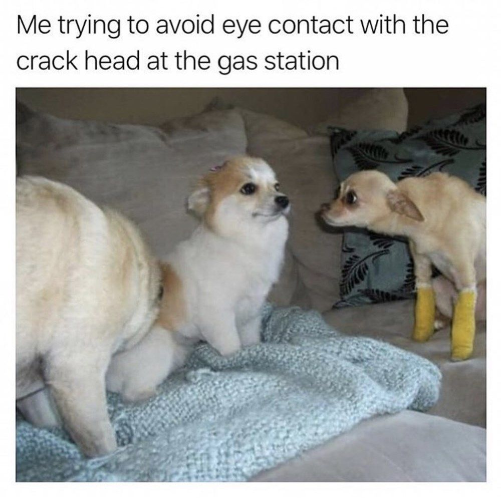 New Funny Memes 30 Animal Memes & Tweets For People Who Prefer Non-Humans 30 Animal Memes & Tweets For People Who Prefer Non-Humans 2