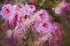 Featured Art - Winter Pinks  by Alice Gipson