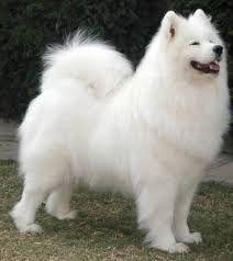 Perros Mas Peque Os Del Mundo Dog Breeds Cute Dog Collars Best Large Dog Breeds
