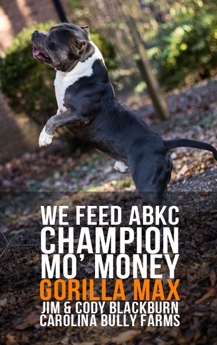 Dog Weight Pulling Tricks Tips From Champion Breeders Dog
