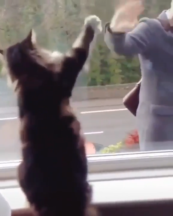 Always wave back at a cat waving at you