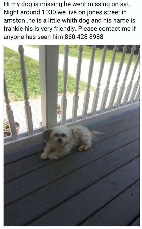 Lost Dog - Havanese in AMSTON, CT Pet Name: Frankie (ID