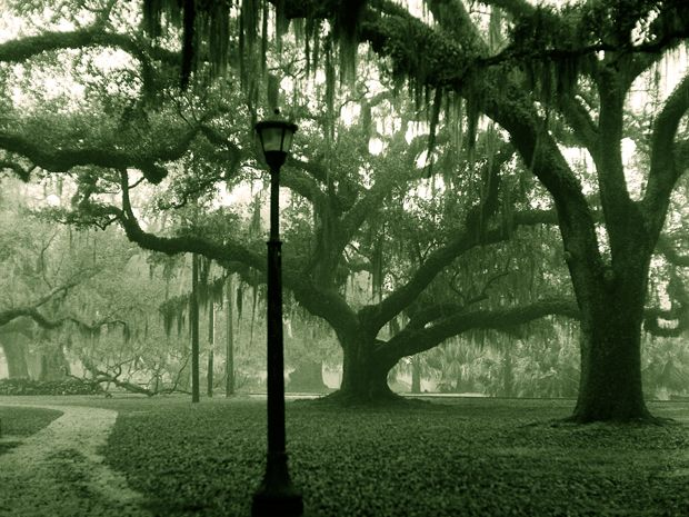 From the tomb of a voodoo priestess to the site of a legendary massacre, explore the Big Easy's spooky side with the most haunted places in New Orleans.