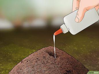 Comment éliminer des fourmis à l'extérieur: 11 étapes