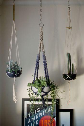 植物を天井から吊るすことができるハンギング 省スペースにもなり