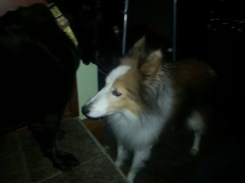 Founddog 1214 hagerstown md halfwaywoodmore