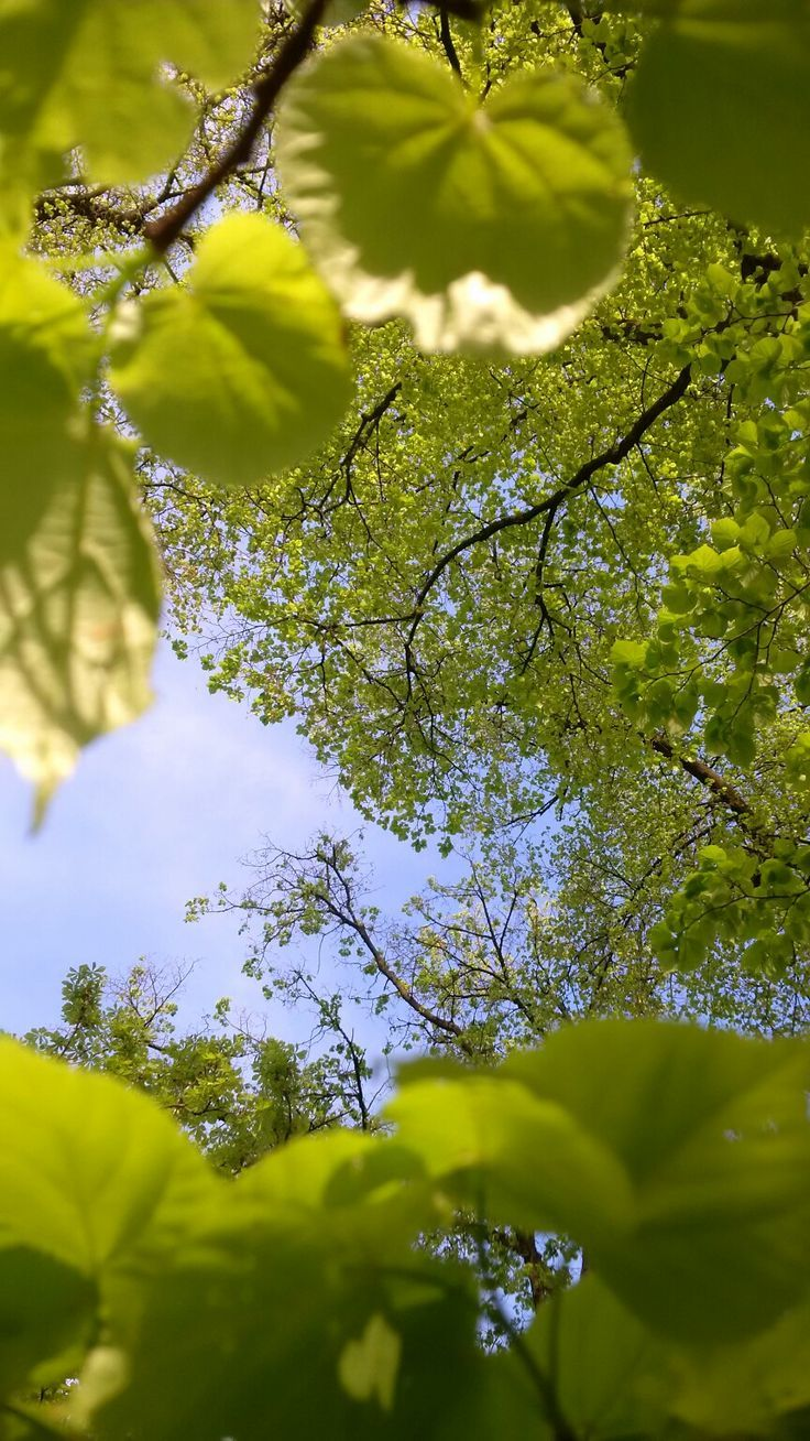Spring Green Beautiful Landscape Wallpaper Nature Photography Landscape Photography
