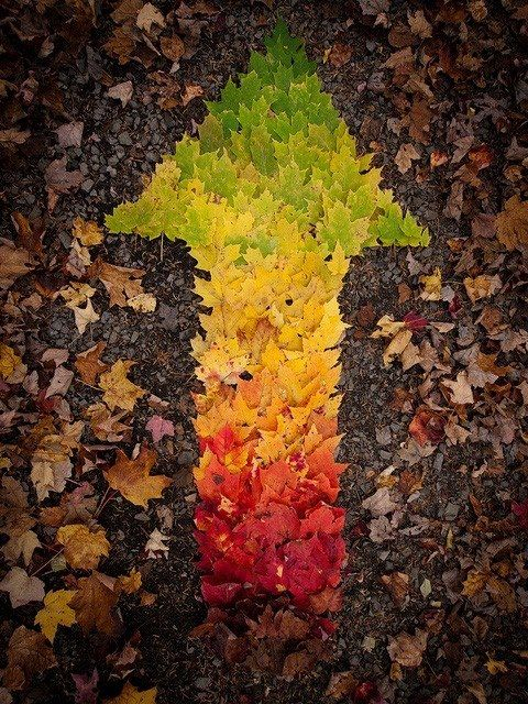 #leaves #arrow -> Right Direction! Sky is the Limit!