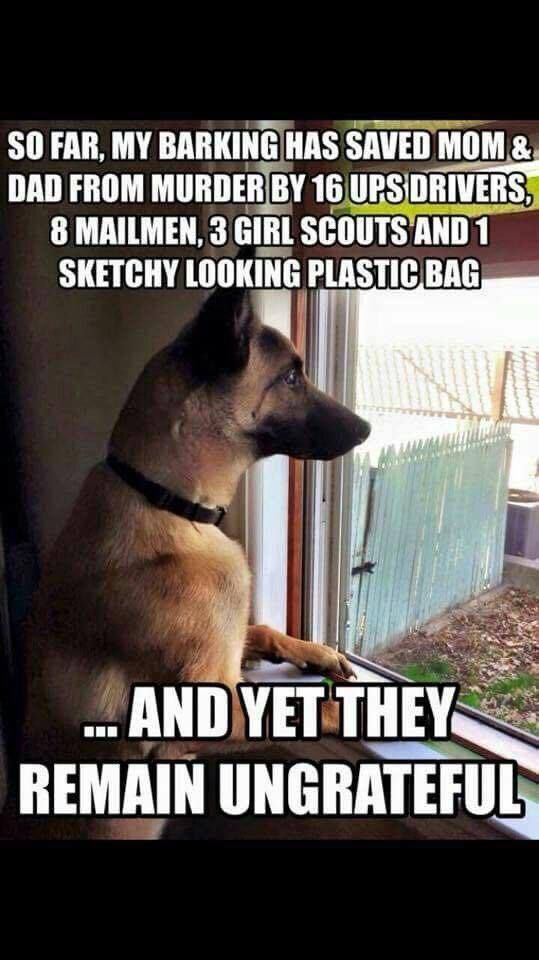 This Is Why I Freakin Love Mals German Shepherd Funny Dog Memes