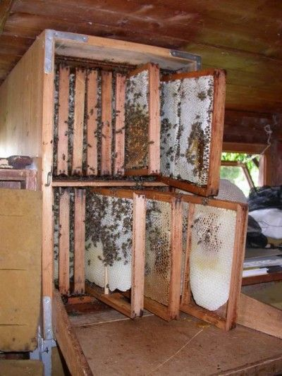 pingl par jay bienfaits sur abeilles apiculture pinterest abeilles apiculture et ruches. Black Bedroom Furniture Sets. Home Design Ideas