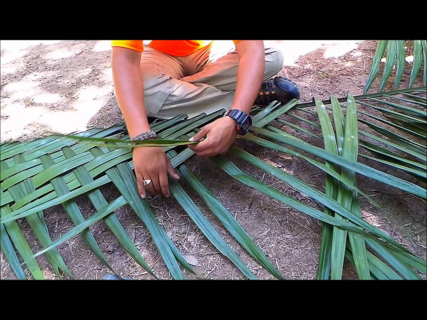 Survival Shelter: Using palm and bamboo