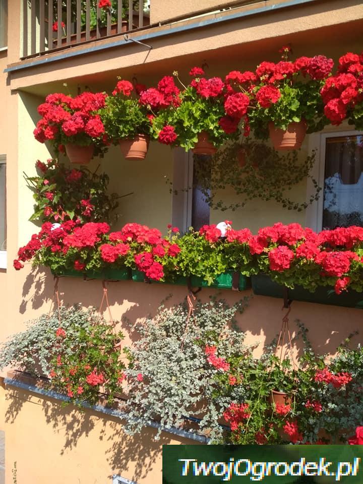 Niezwykly Balkon Plants Floral Wreath Wreaths