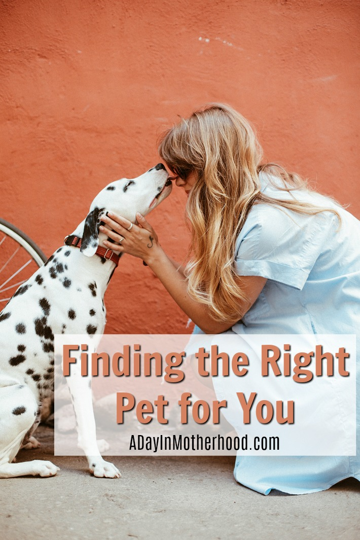 Finding The Right Pet For You Best Pets For Kids Pets Easy Pets