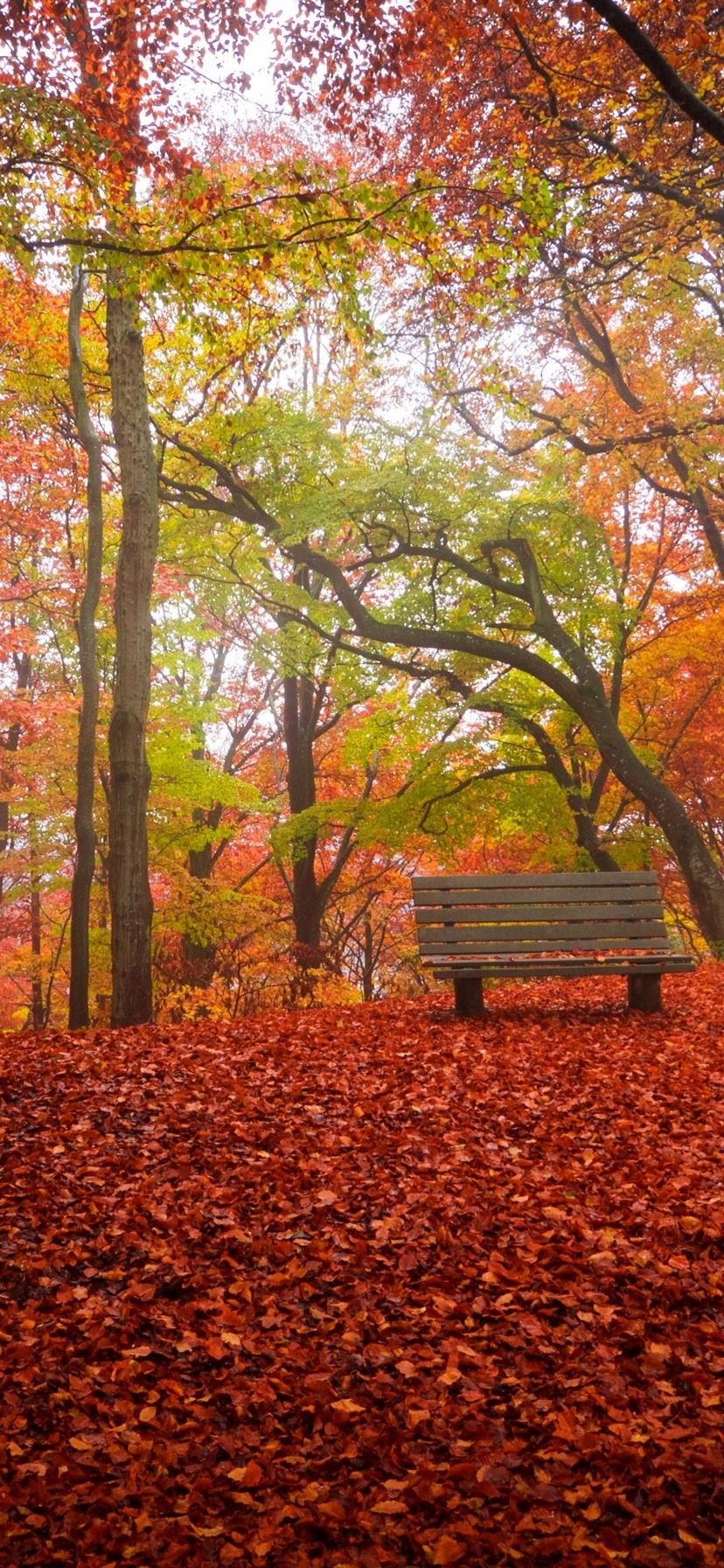 Iphone Xr Wallpaper Autumn Ipcwallpapers In 2020 Iphone Wallpaper Fall Fall Wallpaper Wallpaper Iphone Christmas