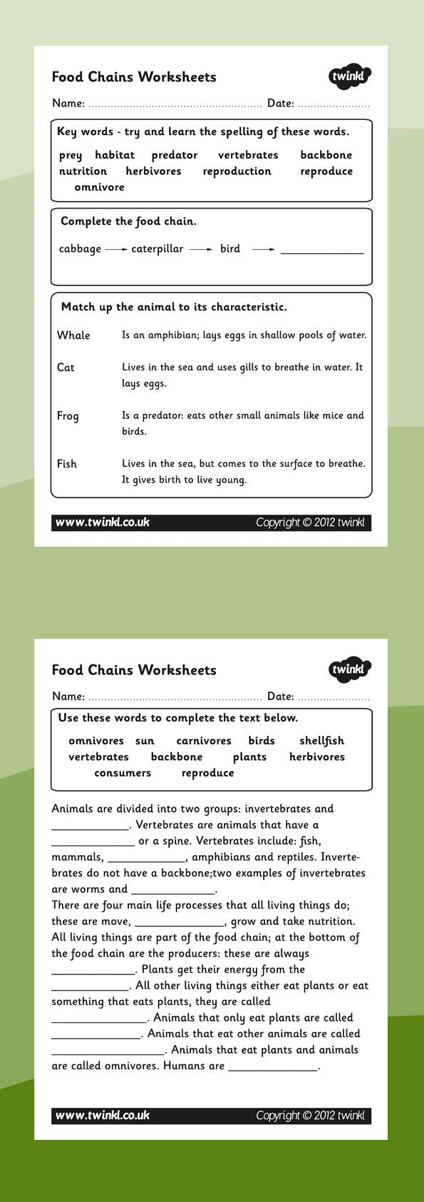 Food Chains Food Chain Worksheets This Handy Worksheet Gives Your Children The Opportunity To Show How Muc Food Chain Biology Worksheet Food Chain Activities