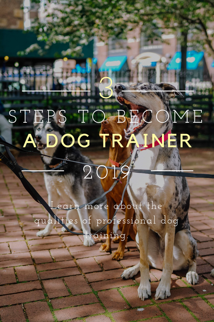 3 Steps To Become A Dog Trainer In 2020 Pawleaks Become A Dog Trainer Dog Training Dog Trainer