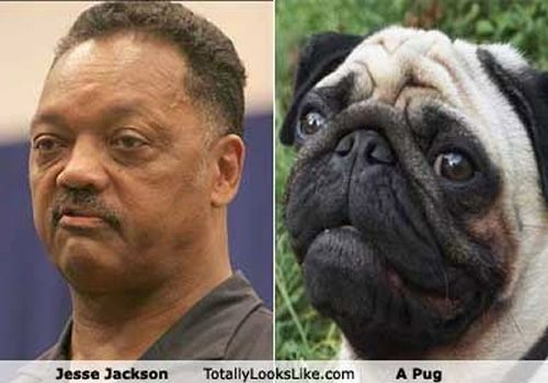 Jesse Jackson Look A Like Pugs Celebrity Look Alike Black Pug