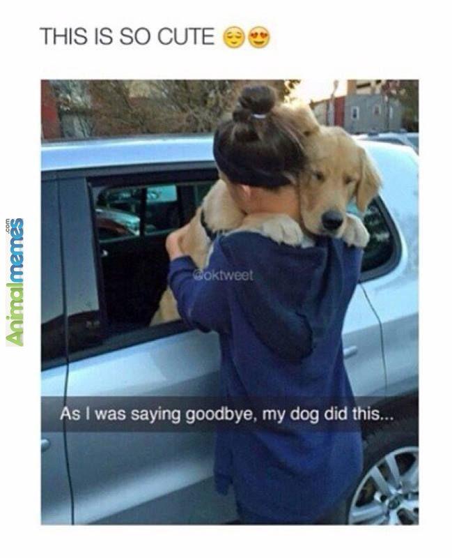 Bye Dog Meme : Memes, Saying, Goodbye, Animals,, Funny, Animals