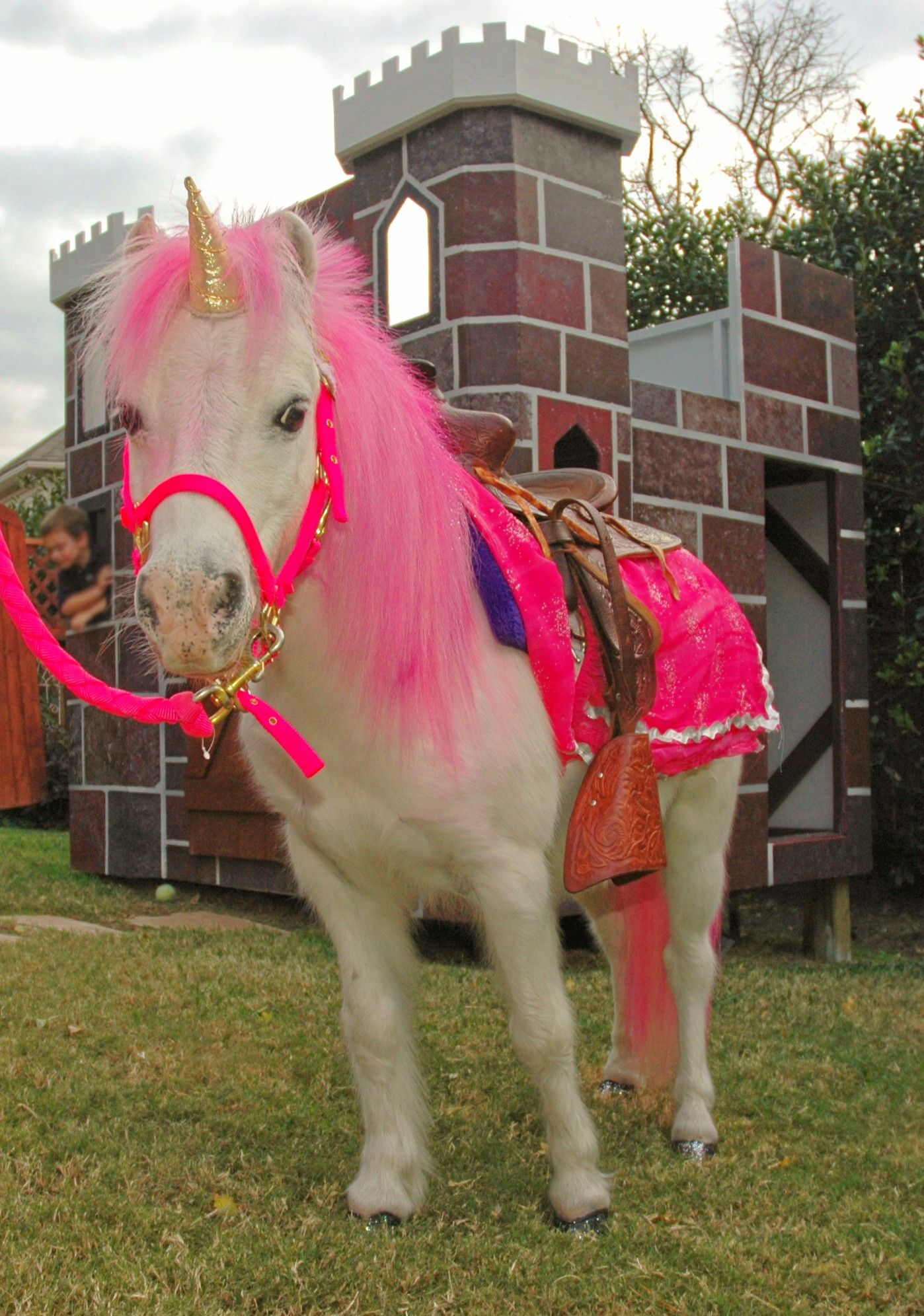 Horses Toys For Girls Birthdays : Future bday for grace pony rides petting zoo