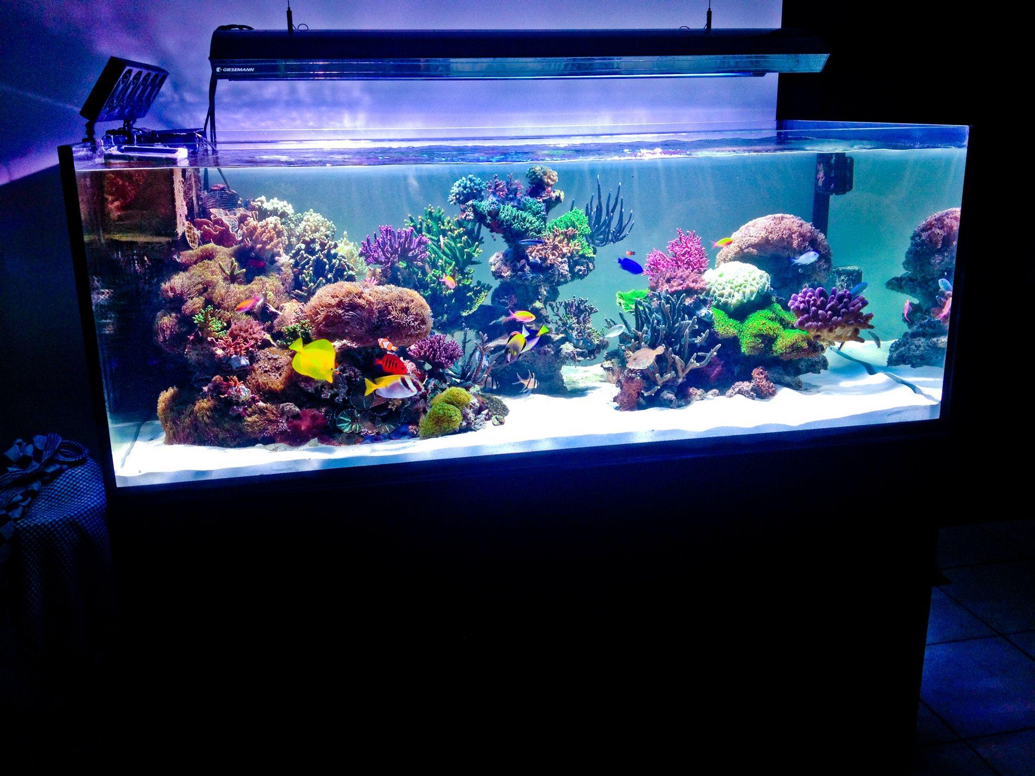 Elos 160 XL Damu0027s Aquarium
