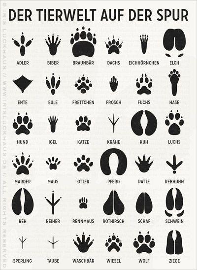 Pin by Tanvi Ahana on Animal Kingdom | Pinterest | Kindergarten ...