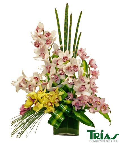 Classical Cymbidium Orchids Flower Delivery Same Day Flower Delivery Flowers