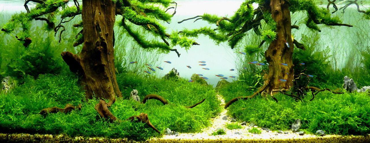 Nanocubes / ReadyReefs   Living Art Aquatic Design Product Catalog