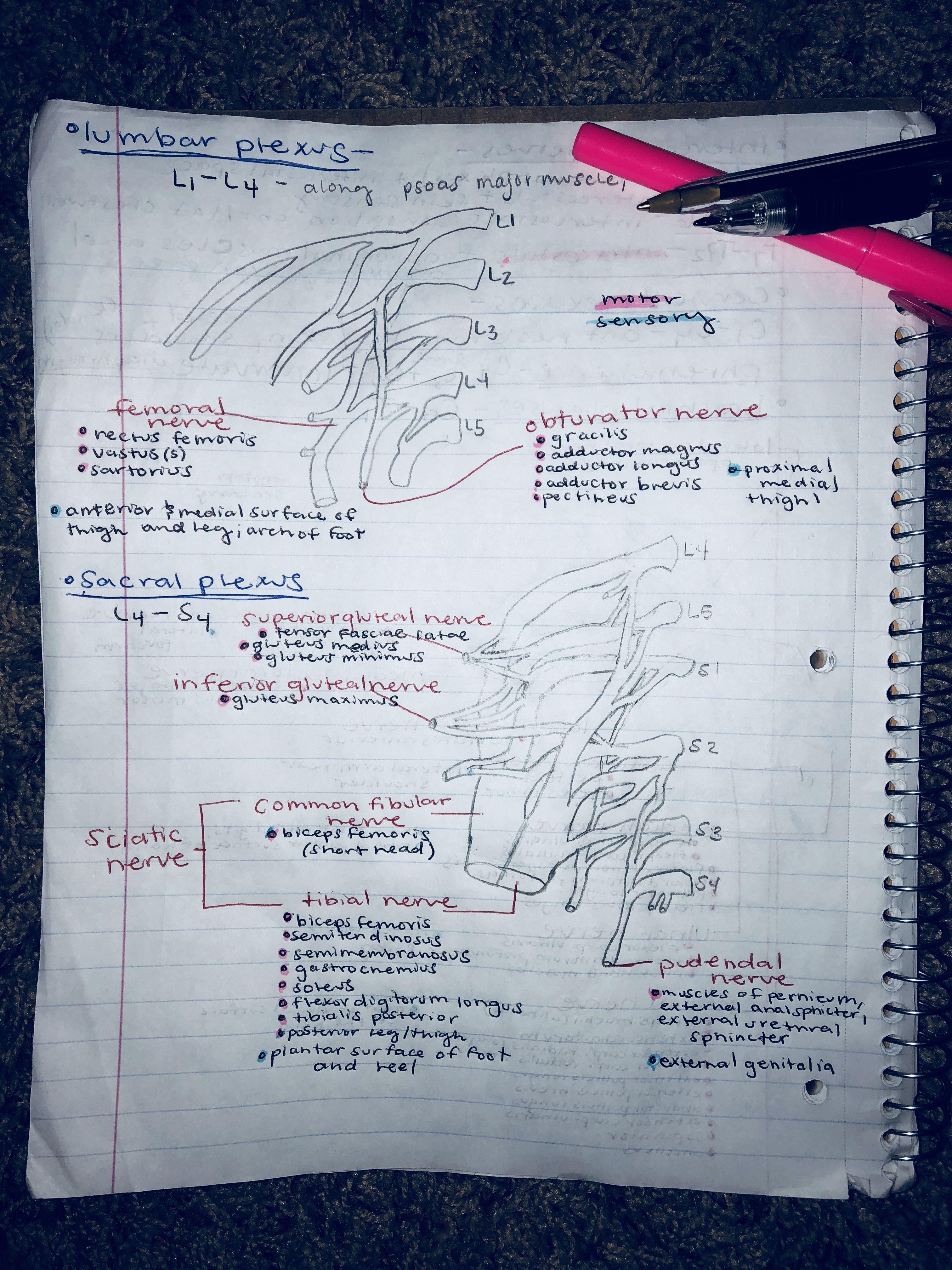 Pin by Saylor on Anatomy | Pinterest | Anatomy