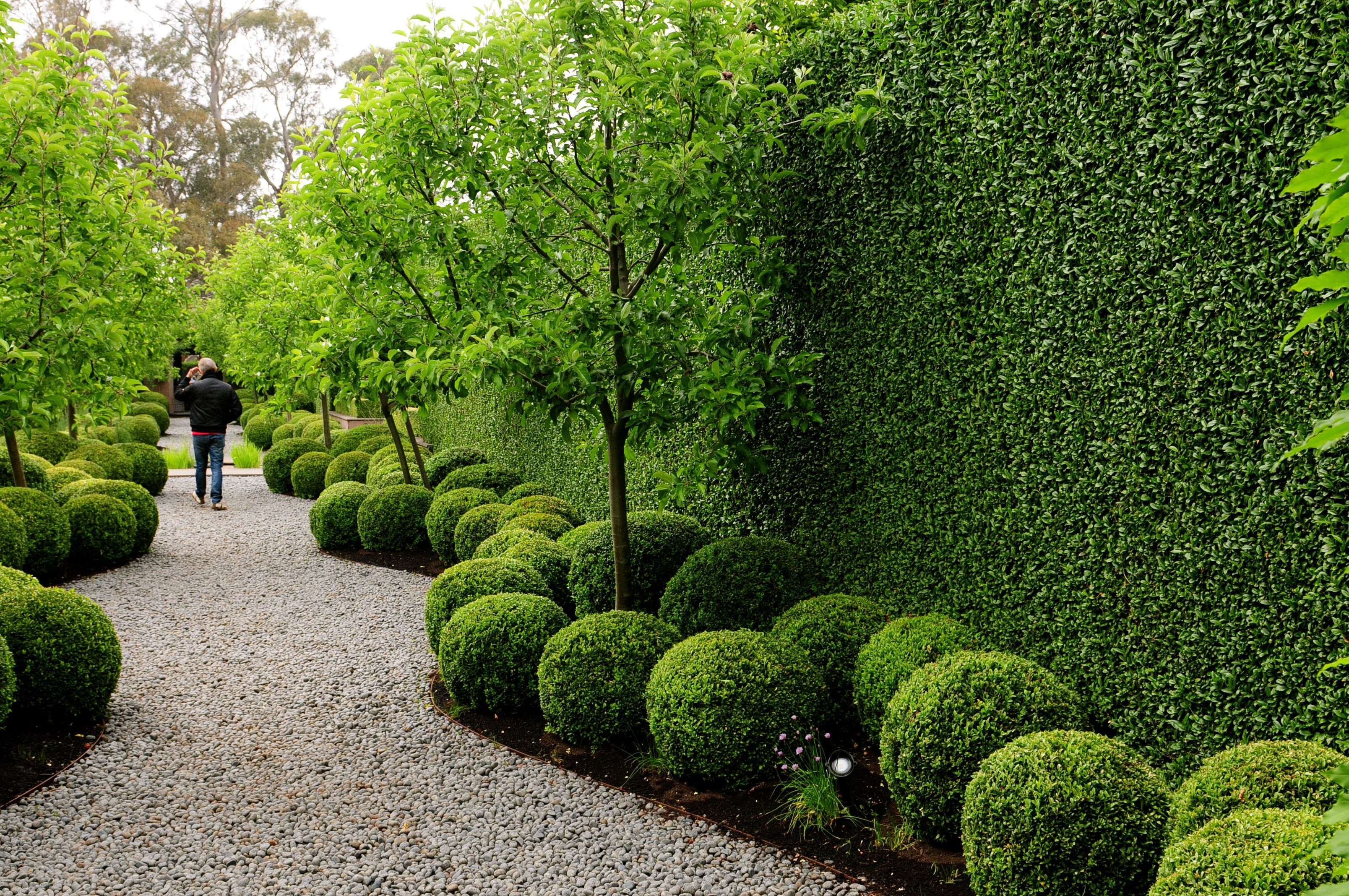 Stonefields - classic hedging