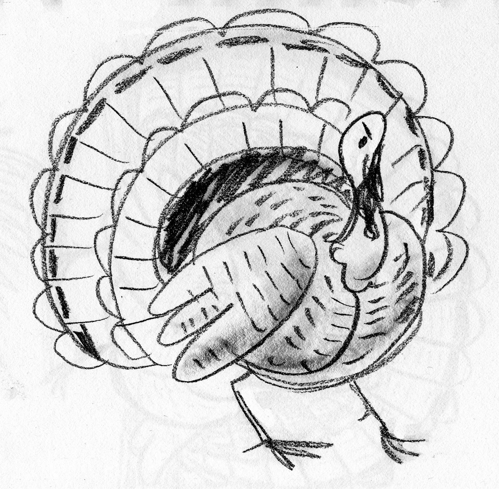 wild turkey pencil drawing displaying 20 u003e images for wild