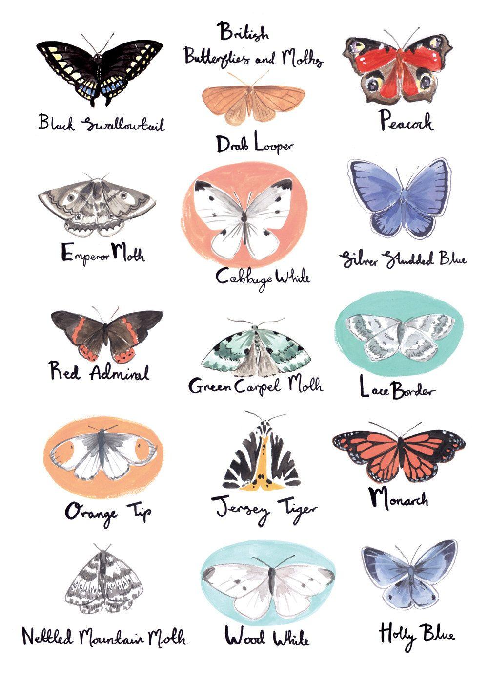Britse Vlinders En Motten A3 Art Print Etsy Butterfly Art Butterfly Art Print Butterfly Illustration