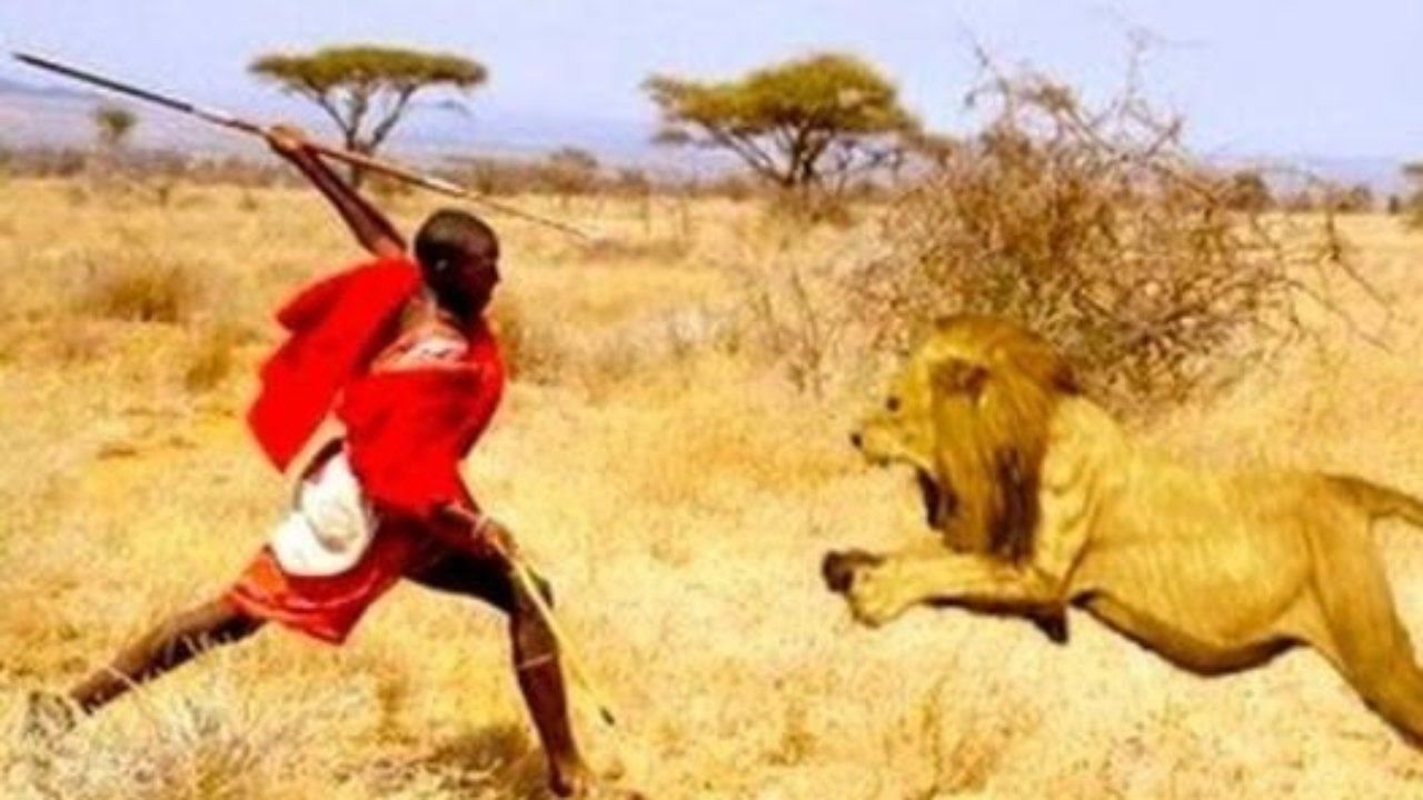 Lions Man vs Lion Who wins-Documentary