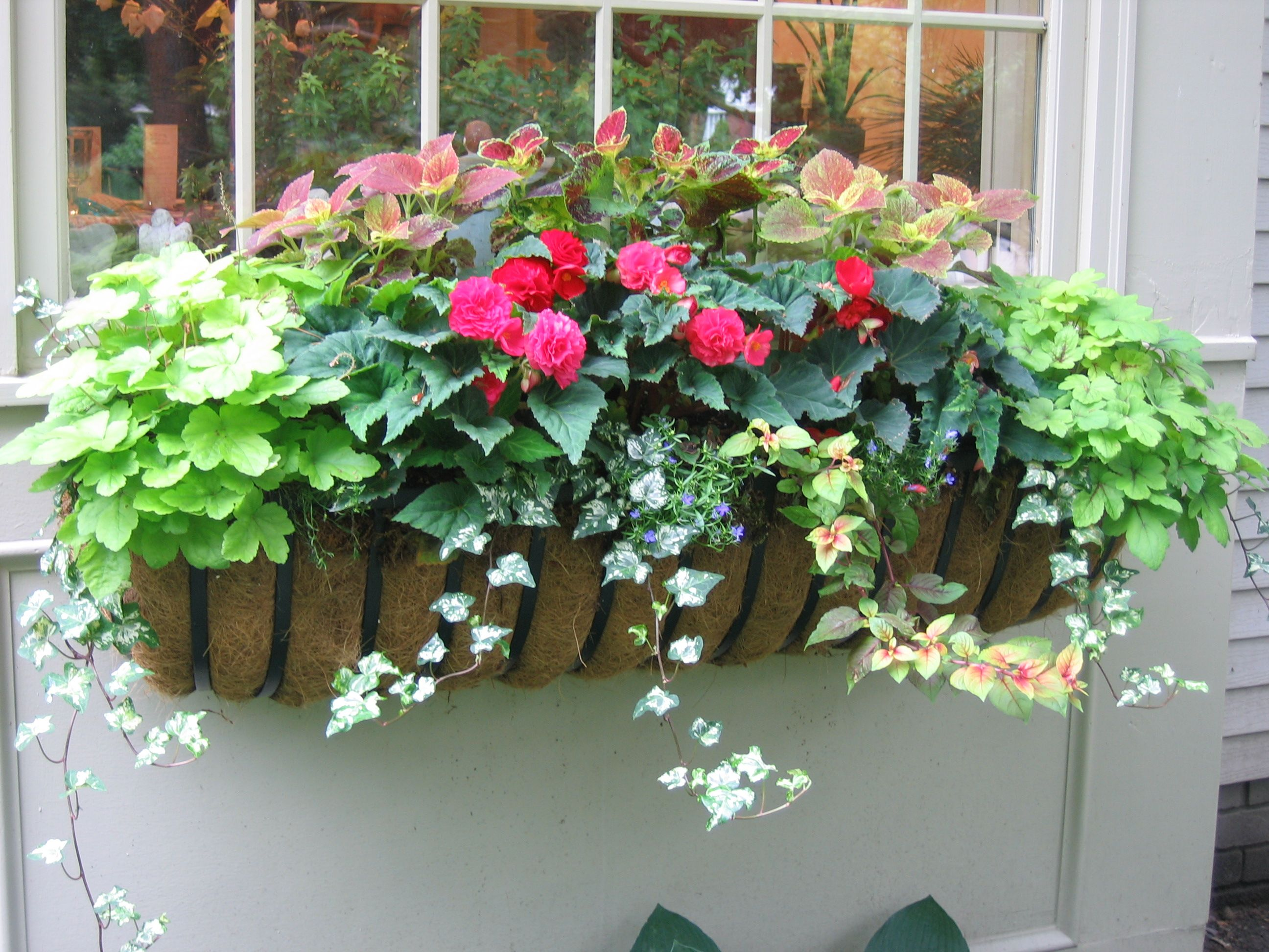 One of my summer window boxes chicita house garden plans for Flower garden box ideas