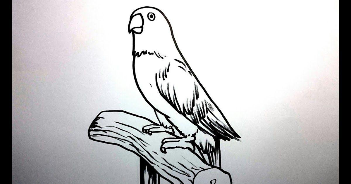 28 Gambar Kartun Burung Hinggap Di Pohon Menggambar Burung Lovebird Dengan Mudah Download Mirzan Blog S 20 Koleski Terb Gambar Kartun Gambar Burung Kartun