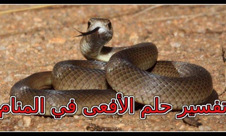 تفسير حلم الافعى Animals Snake Interpretation