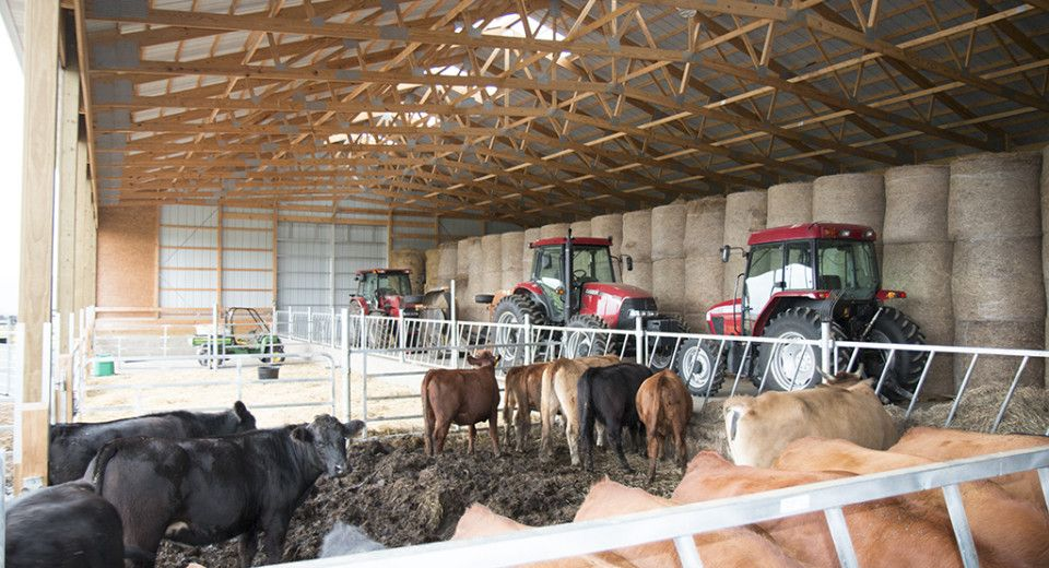 Morton Understands The Importance Of A Quality Livestock Facility To Keep Your Animals Healthy And Safe Read About Livestock Barn Cattle Barn Morton Building