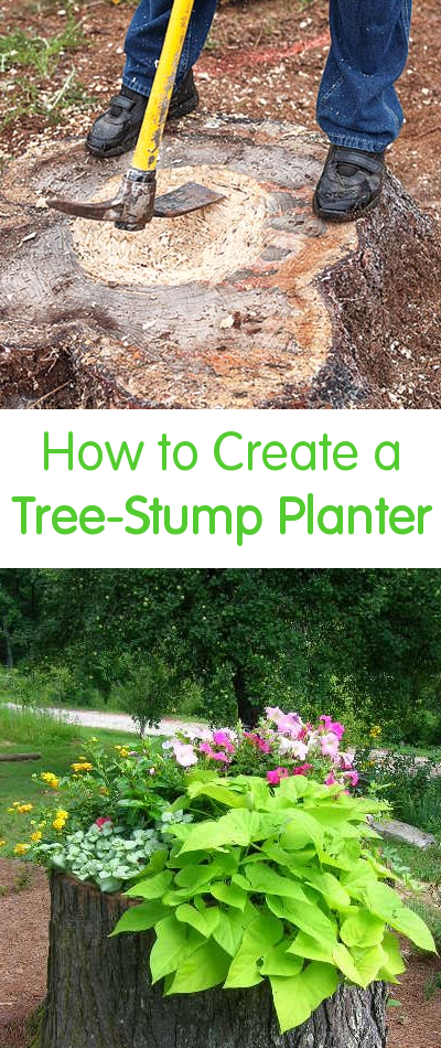 How To Create A Tree Stump Planter Plants Garden