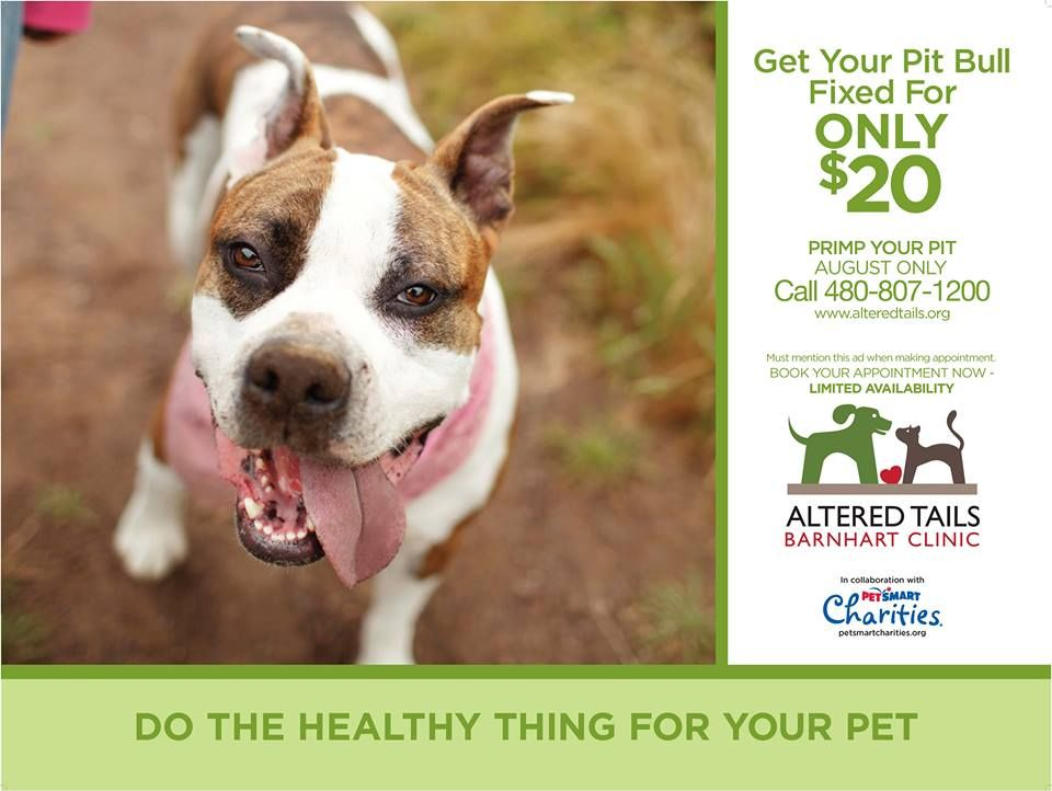 Space Is Limited So Call To Make Your Appointment Now Dog Friends Pismo Beach Dogs