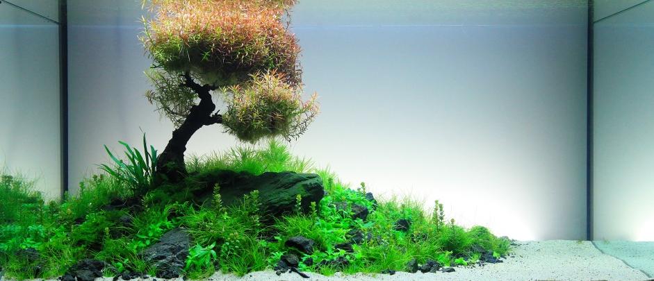 Nature style aquarium with underwater tree aquarium for Fish tank tree