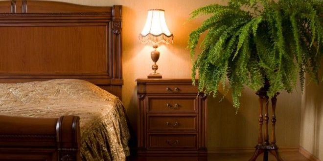 Kwiaty Rosliny Doniczkowe Idealne Do Sypialni Sposob Na Wszystko Porady Domowe Sposoby Jak Zrobic Bedroom Plants Plant Decor Indoor Decor