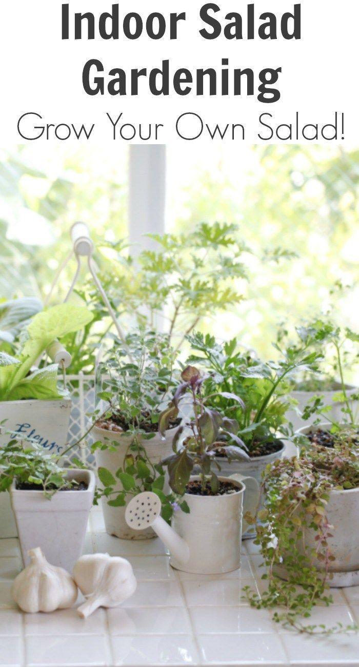 Indoor salad gardening grow your own salad blogger support