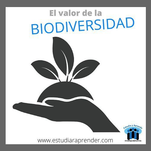 El Valor De La Biodiversidad La Biodiversidad Actividades Secundaria Actividades Para Ninos Pequenos