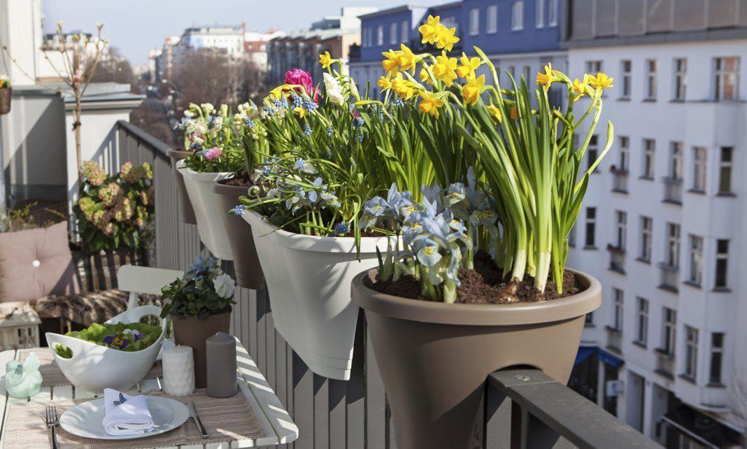 Весенние луковичные цветы на балконах и лоджиях ...